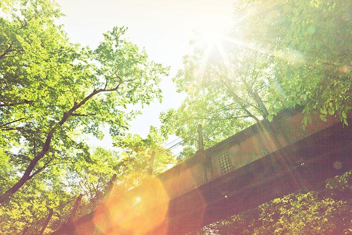 橋の下,木漏れ日