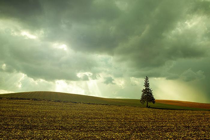 美瑛,クリスマスの木