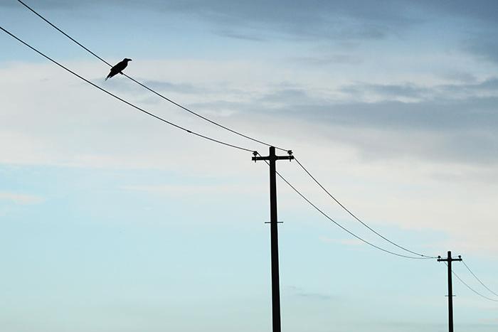 電柱,電線,カラス