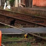 線路,踏切,猫
