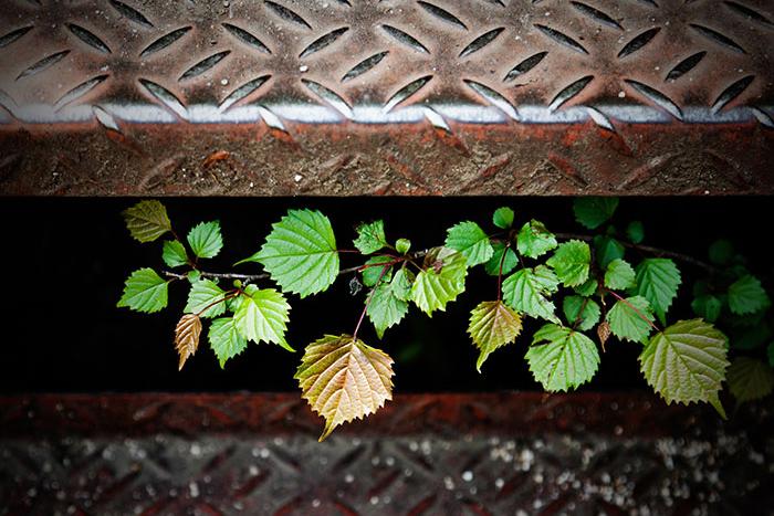 階段下の葉